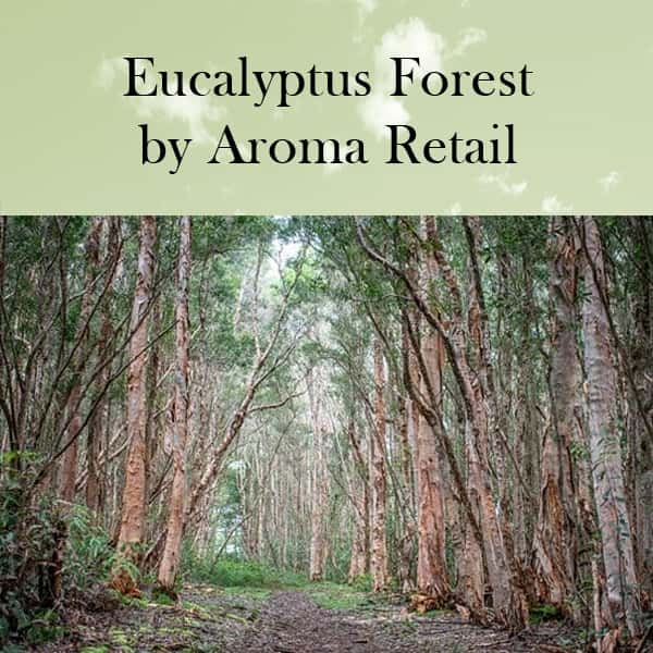 Eucalyptus Forest by Aroma Retail Fragrance Oil
